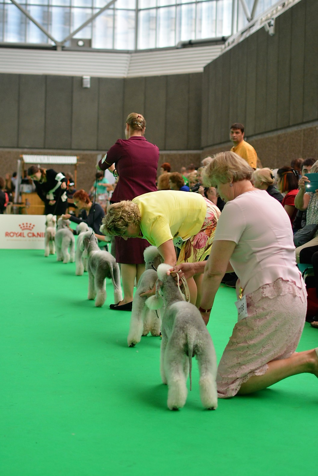 World Dog Show (World Dog Championship) in 2018 60