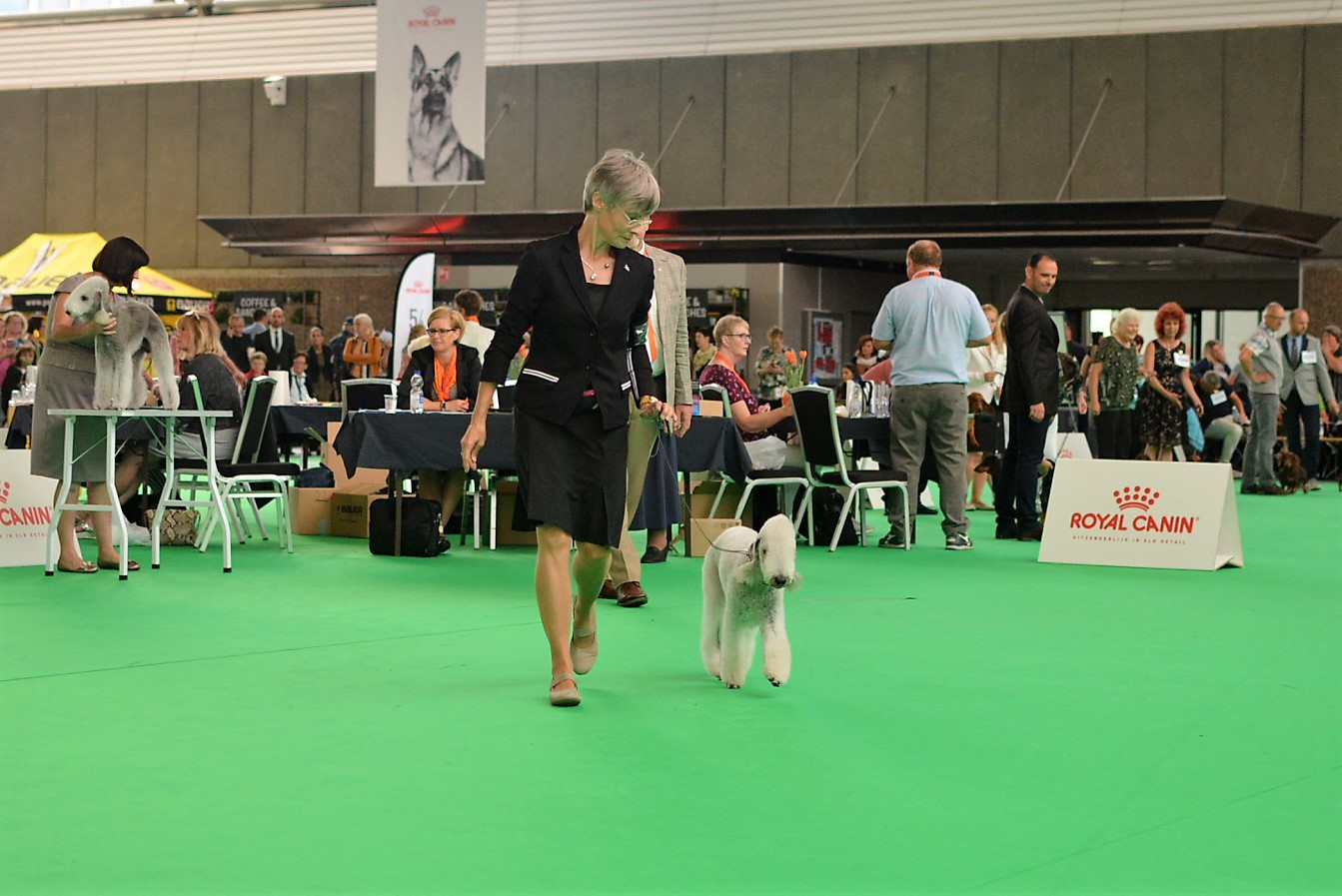 World Dog Show 2018 Blue Hunter Iron Maiden 2