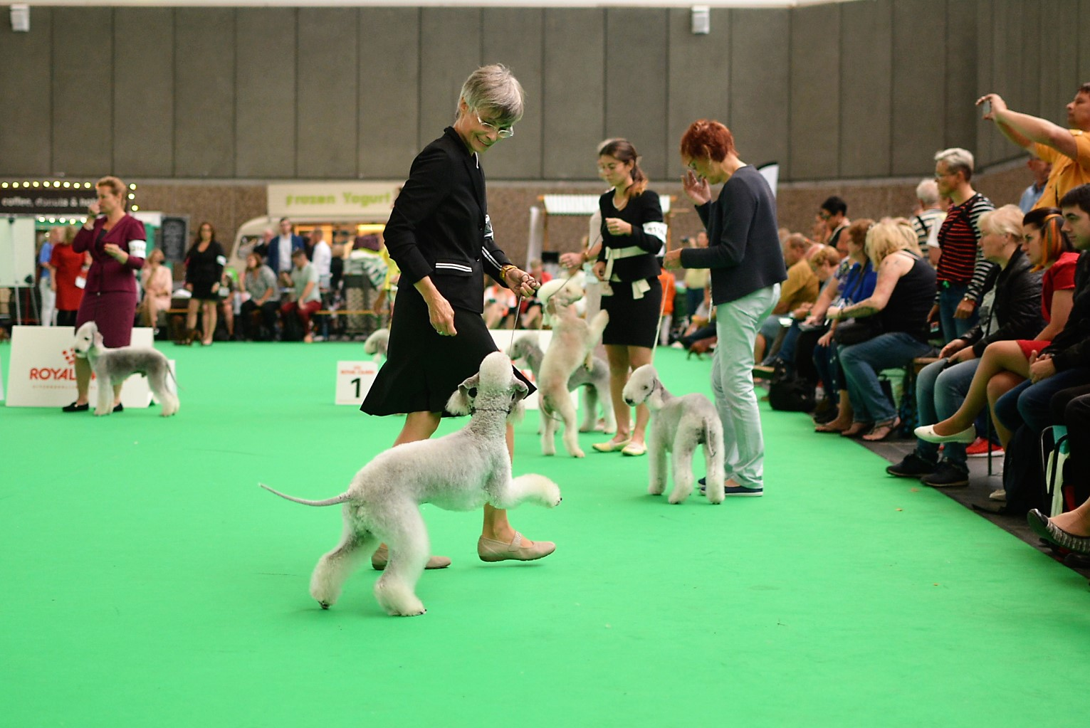 World Dog Show 2018 Blue Hunter Iron Maiden 3