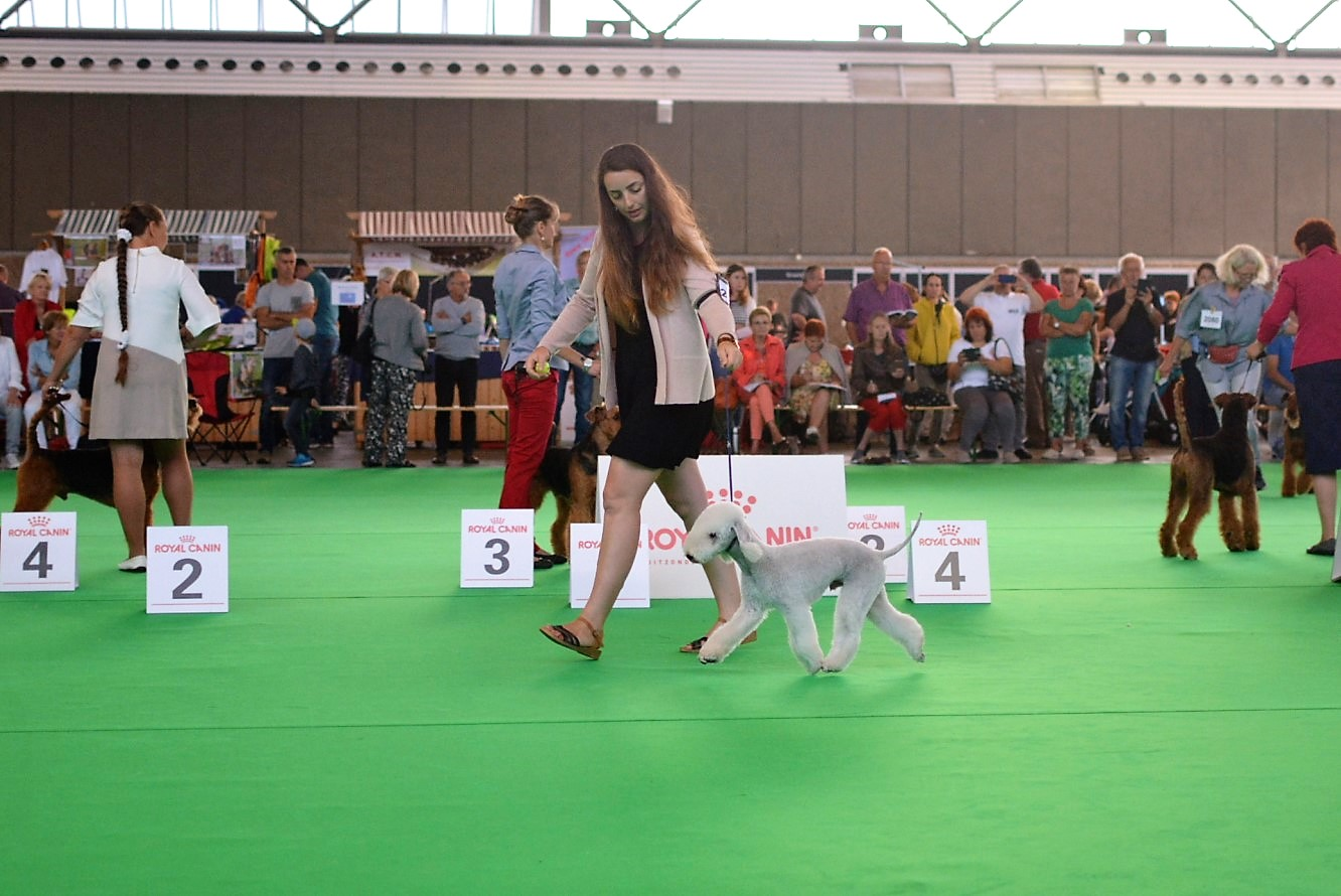 World Dog Show 2018 Cadillac Car De Ochopeniques