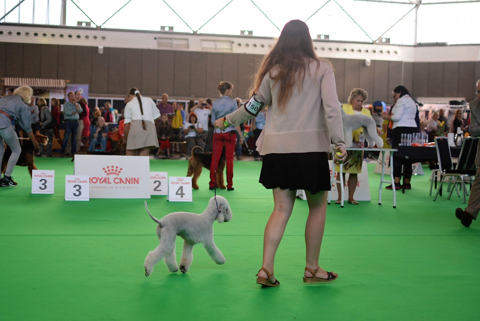 World Dog Show 2018 Cadillac Car De Ochopeniques 2
