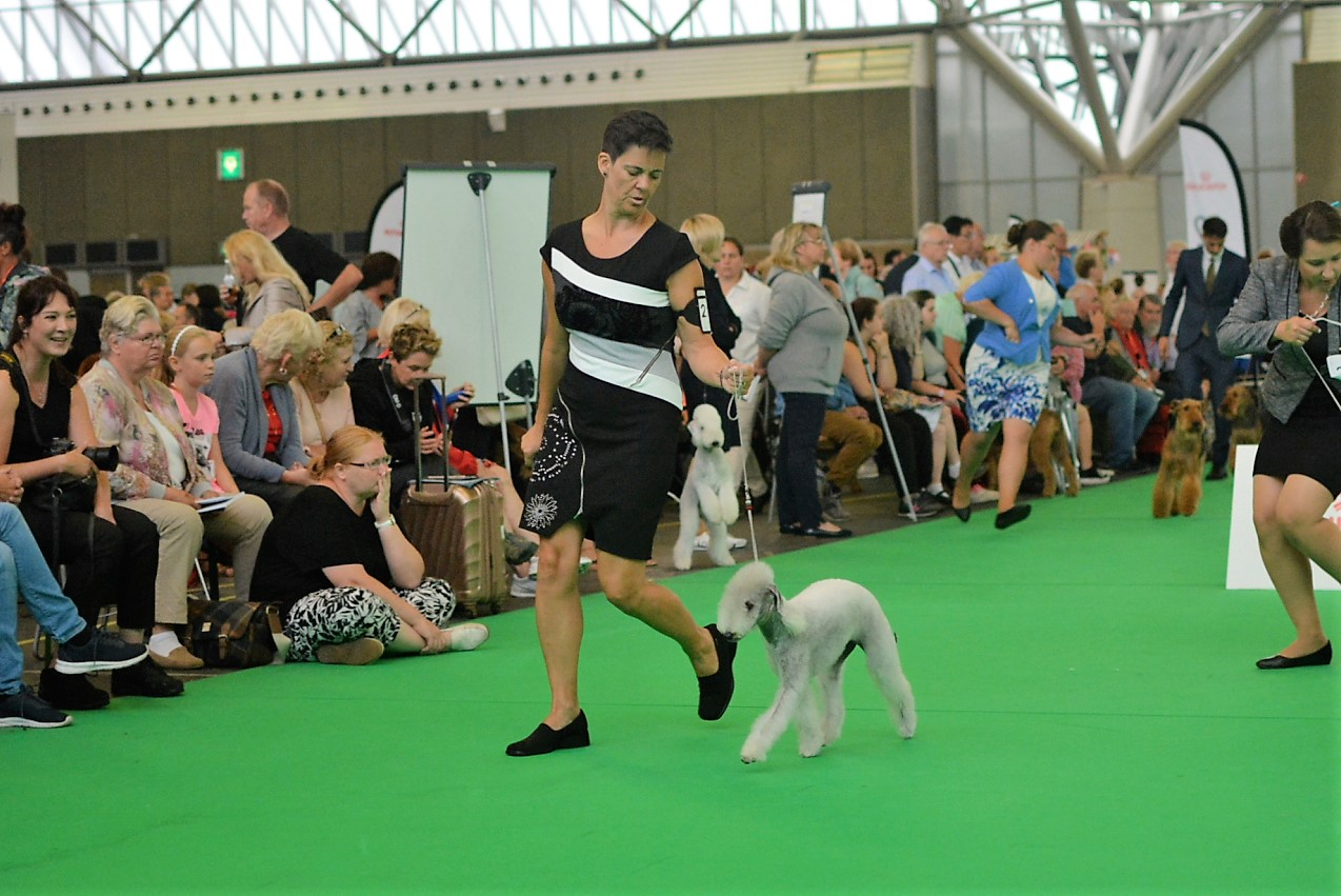 World Dog Show 2018 Pionono Quedate A Mi Lado