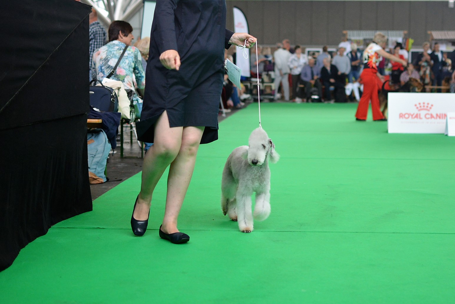 World Dog Show 2018 Almasy's Blue Heaven 2
