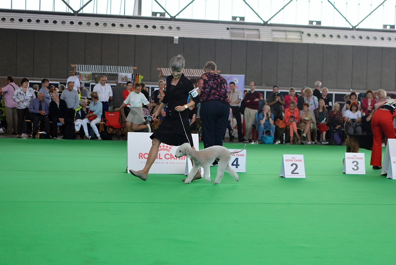 World Dog Show 2018 Blue Hunter East Wood Kolja