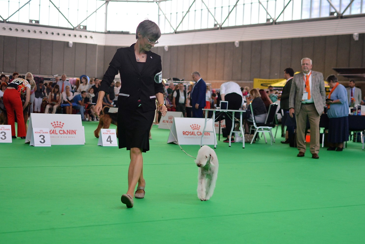 World Dog Show 2018 Blue Hunter East Wood Kolja 2