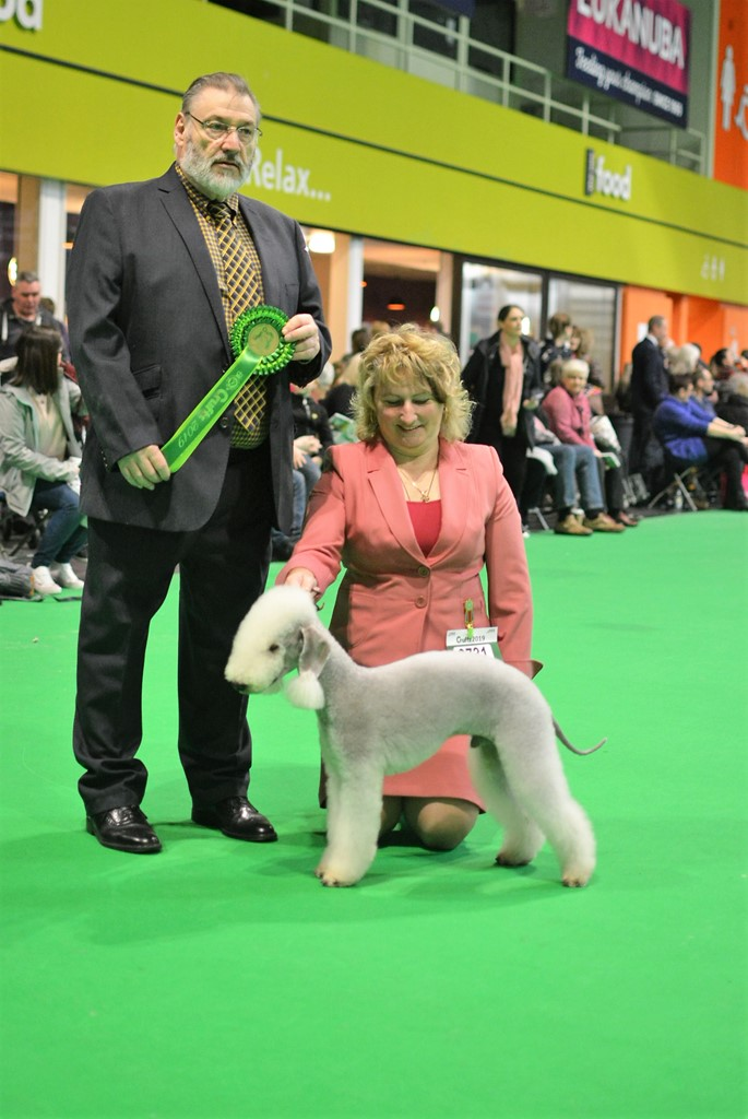 Crufts 2019 Best Of Breed_8.JPG