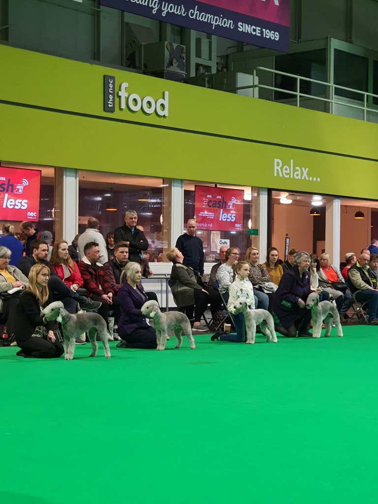 Crufts 2020 Dog Post Graduate Class
