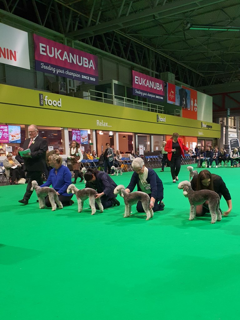 Crufts 2020 Bitch Limit Class Winners