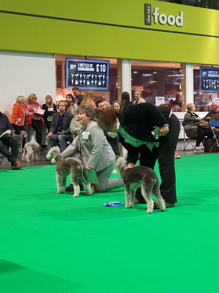 Crufts 2020 Bitch Veteran Class Winners 2