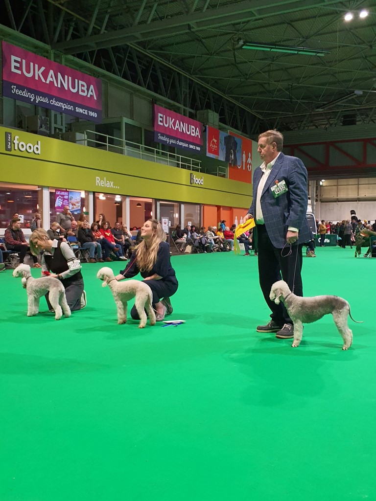 Crufts 2020 Bitch Puppy Class Winners