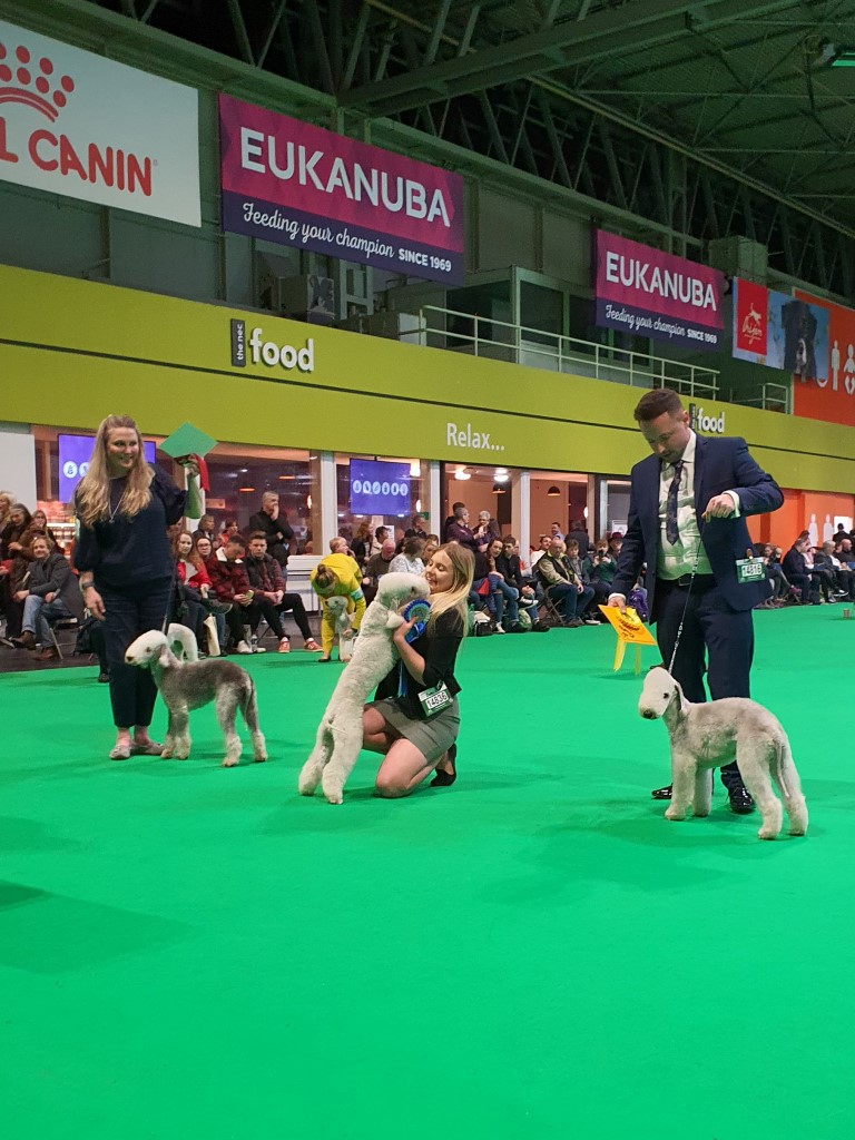 Crufts 2020 Dog Puppy Results
