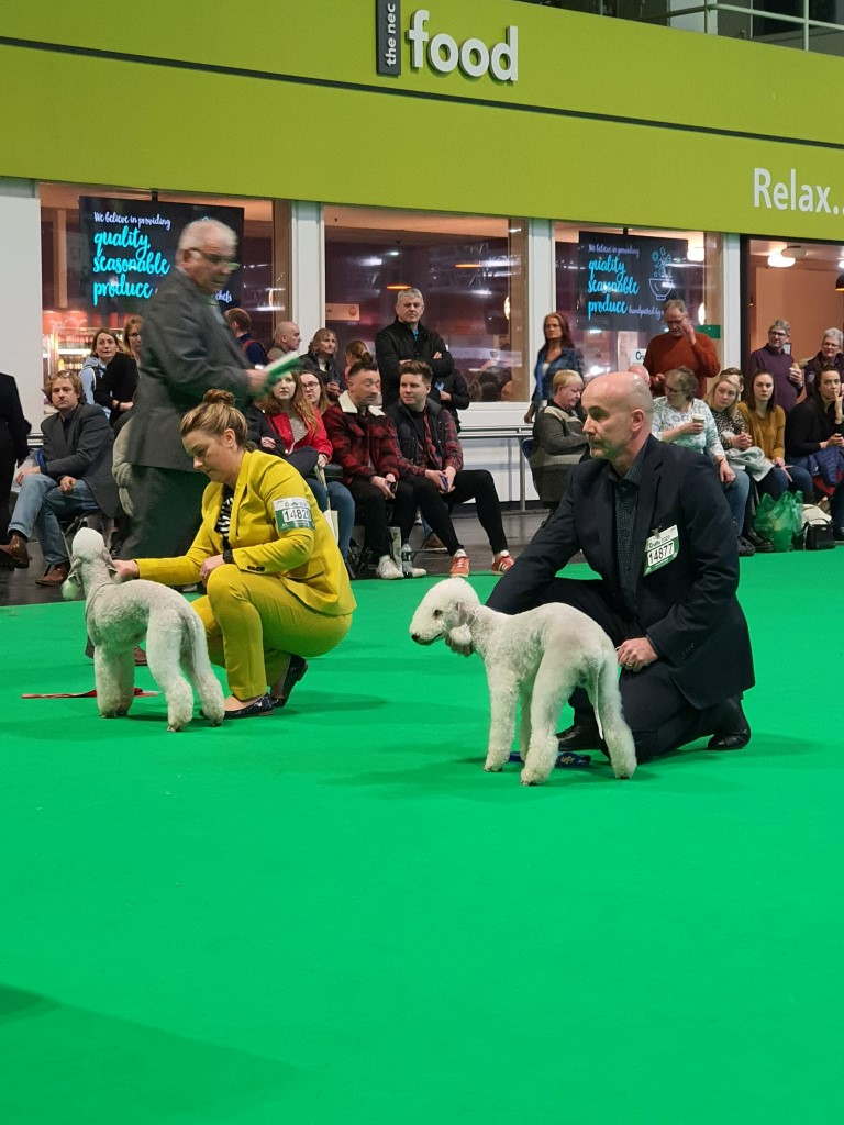 Crufts 2020 Dog Junior Winners