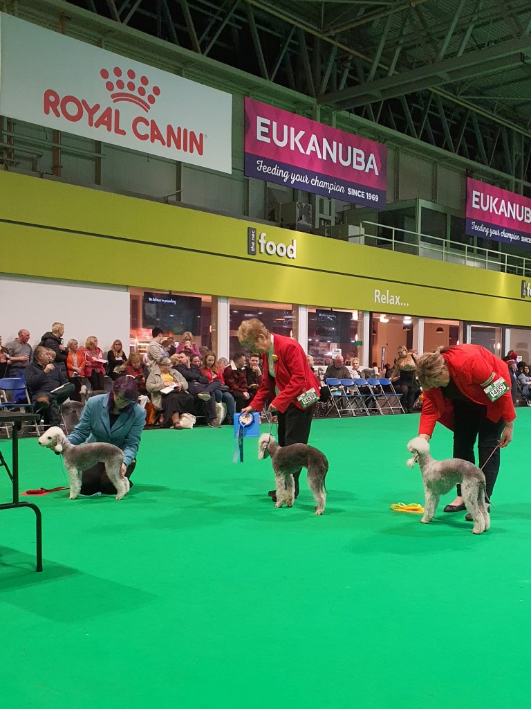 Crufts 2020 Bitch Junior Class Winners