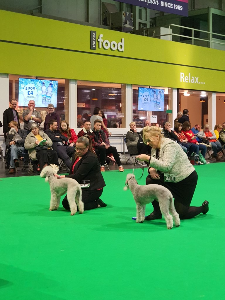 Crufts 2020 Dog Open Results 2