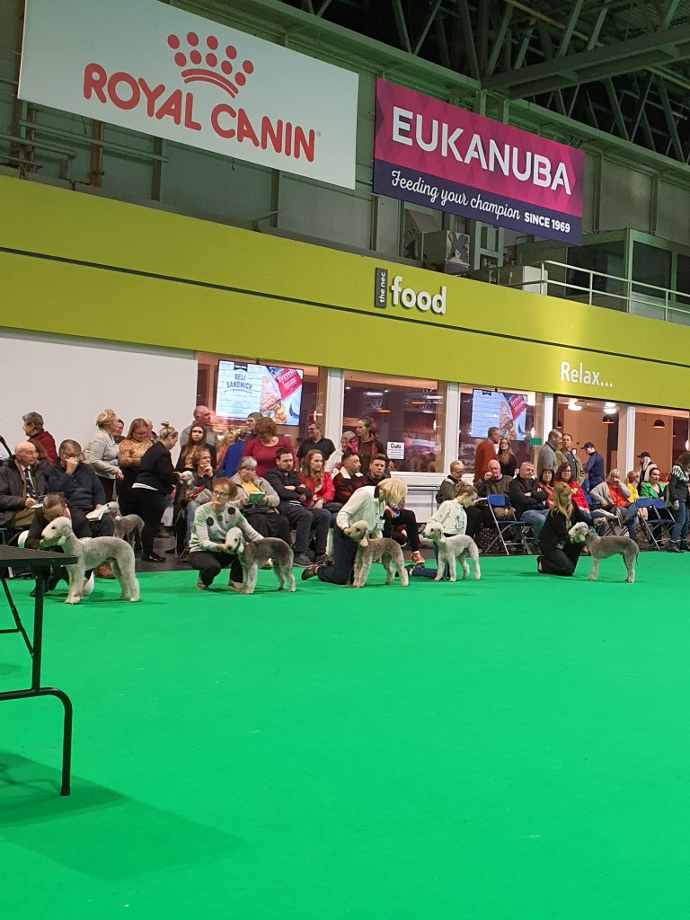Crufts 2020 Dog Good Citizen Dog Scheme