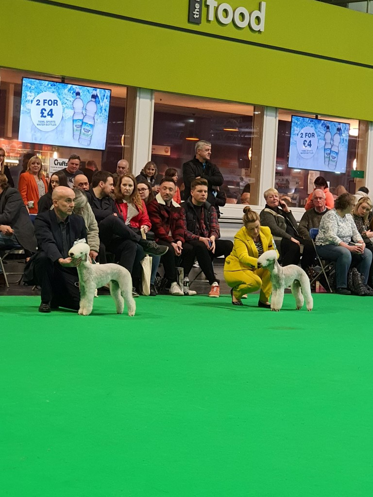 Crufts 2020 Dog Junior Class