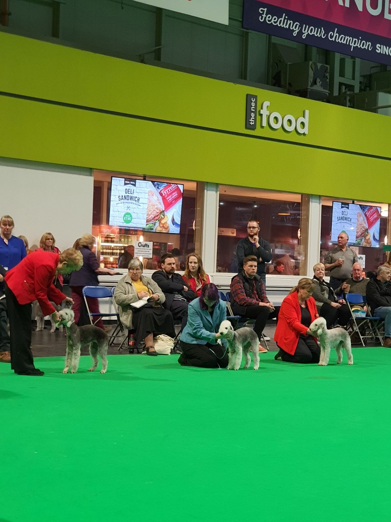 Crufts 2020 Bitch Junior Class