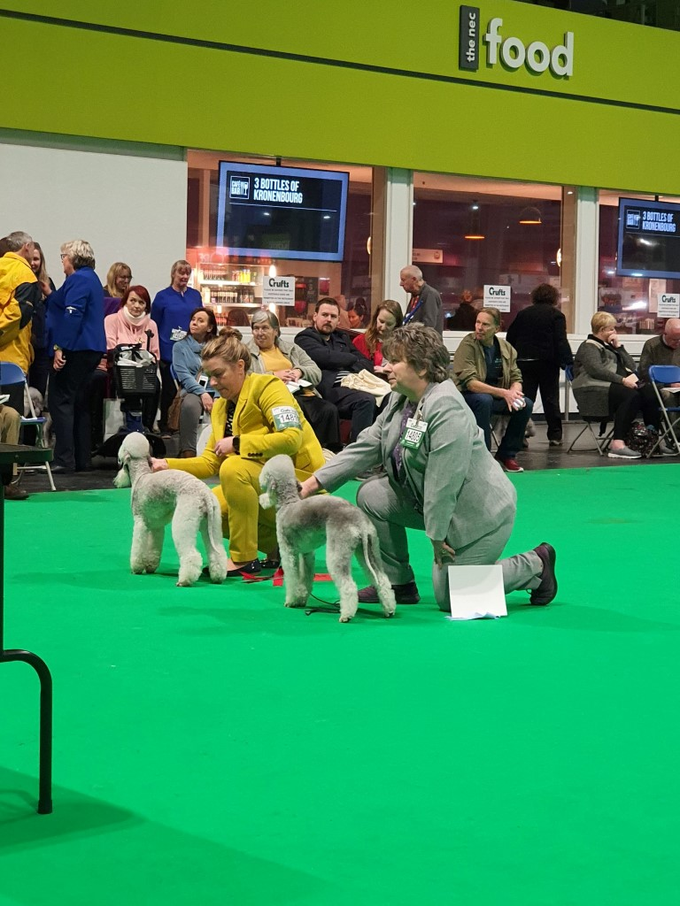 Crufts 2020 Bitch Open Class Winners 2