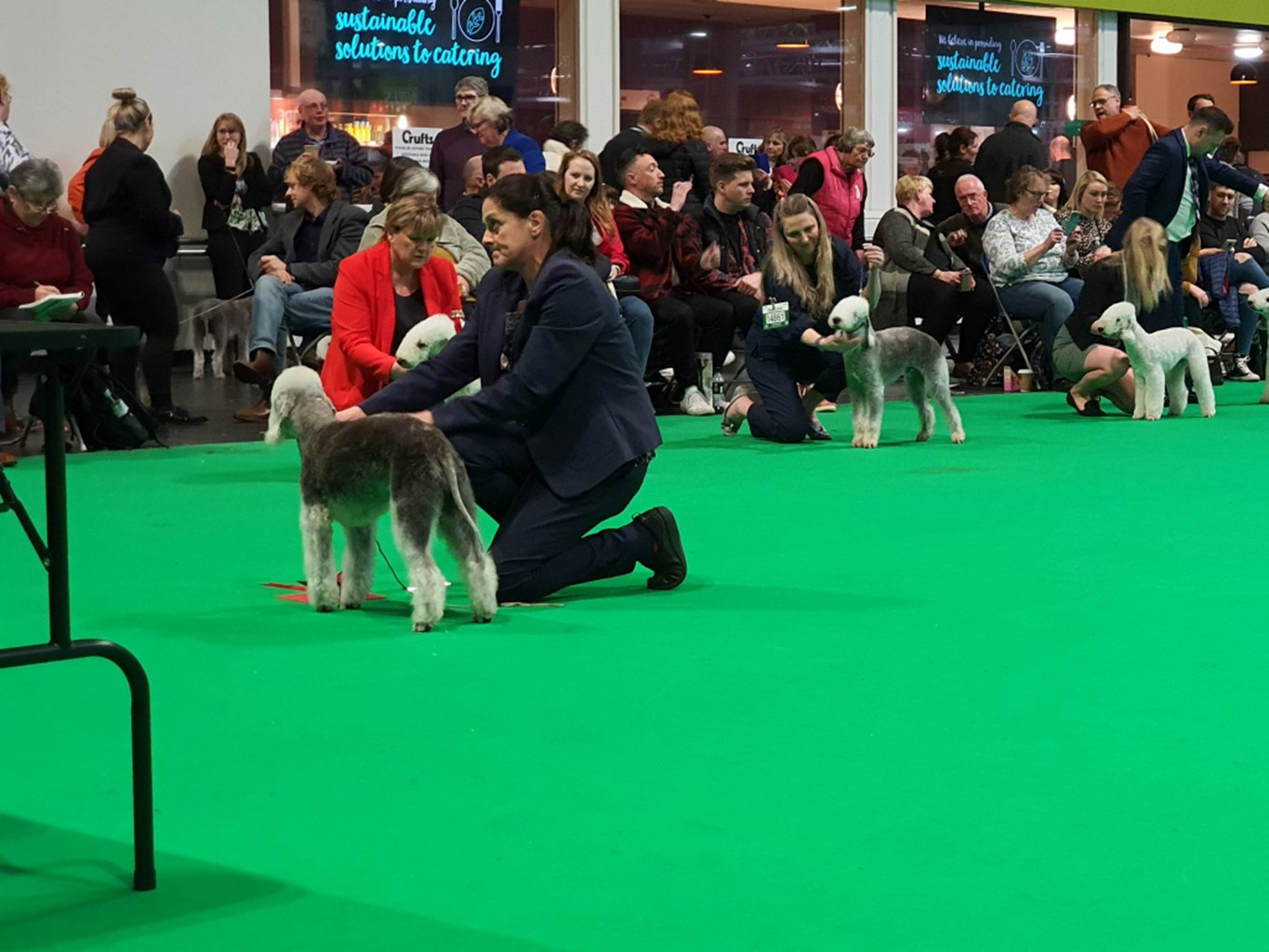 Crufts 2020 Dog Veteran Winners